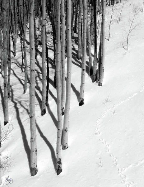 Photograph - High Country Aspen by Wayne King