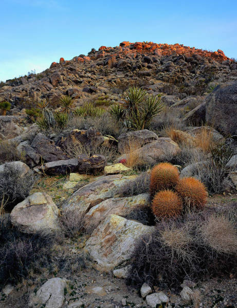 Photograph - High Desert Garden by Paul Breitkreuz
