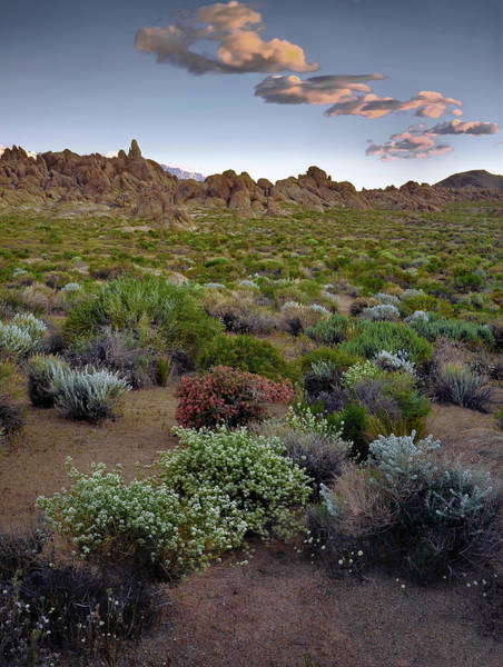 Photograph - High Desert Hues by Paul Breitkreuz