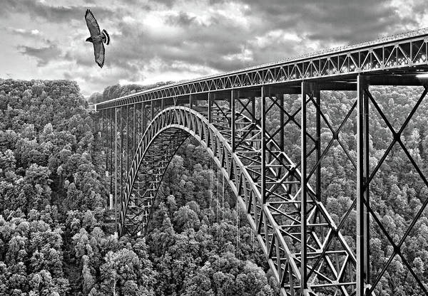 River Hawk Photograph - High Flight Bw by Steve Harrington