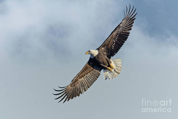 Photograph - High Flight by Craig Leaper