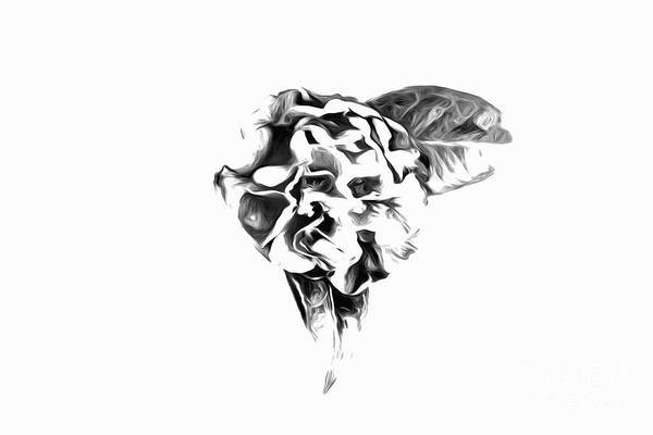 Photograph - High Key Camellia In Black And White by Kay Brewer