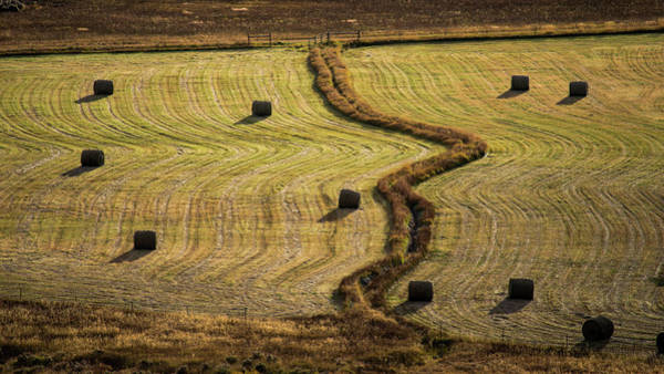 Photograph - High Mountain Hay Field #1 by Stephen Holst