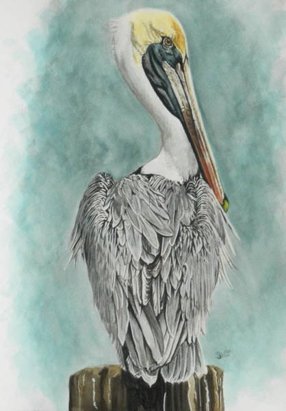 Pelican Mixed Media - High Muckity-muck by Barbara Keith