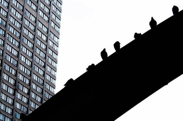 Photograph - High Rise by Jean Gill