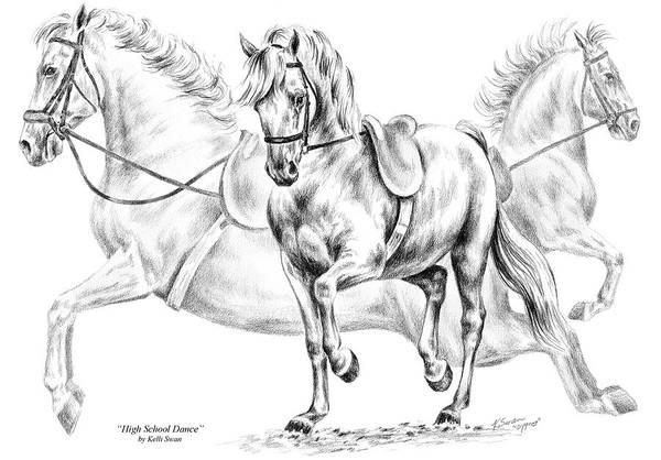 Drawing - High School Dance - Lipizzan Horse Print by Kelli Swan