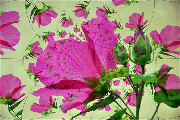 Wall Art - Photograph - High Tea With Pink Hibiscus by Rose  Hill