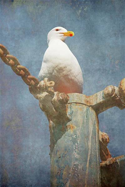 Photograph - High-up On The Watchtower , Seagull by Flying Z Photography by Zayne Diamond