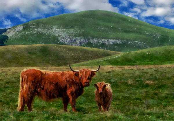 Photograph - Highland Cattle by Anthony Dezenzio