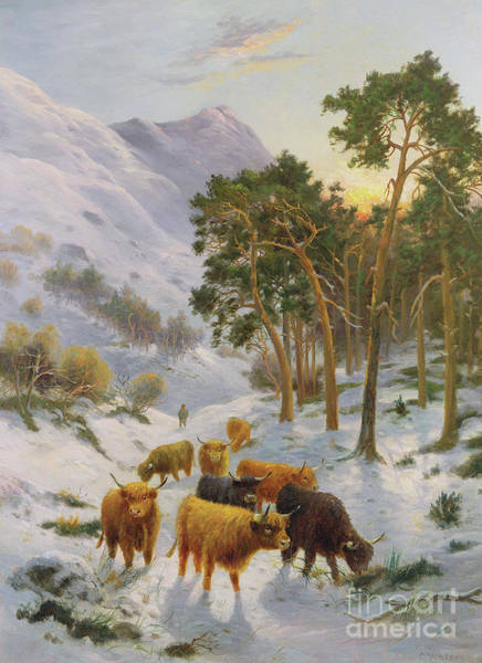 Terrain Painting - Highland Cattle In A Winter Landscape by Charles Watson