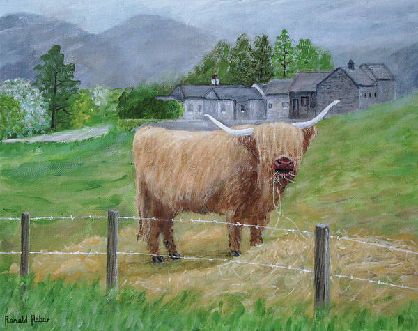 Lake District Painting - Highland Cow by Ronald Haber