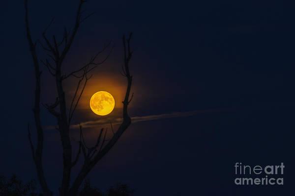 Perigee Moon Photograph - Highland Moon  by Thomas R Fletcher