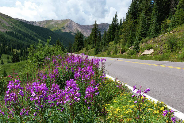 Photograph - Highway To Aspen by Cascade Colors