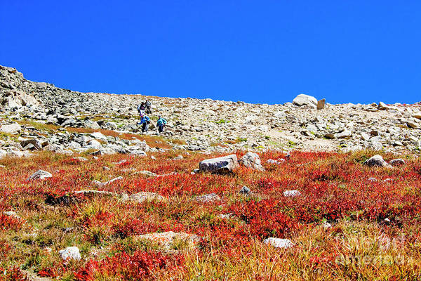 Photograph - Hikers And Autumn Tundra On Mount Yale Colorado by Steve Krull