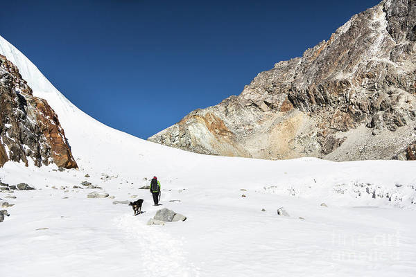 Photograph - Hiking Dog In Cho La Pass In Nepal by Didier Marti