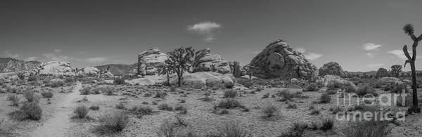 Tree Climbing Photograph - Hiking In Joshua Tree Pano Bw by Michael Ver Sprill