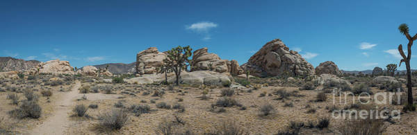 Tree Climbing Photograph - Hiking In Joshua Tree Pano by Michael Ver Sprill