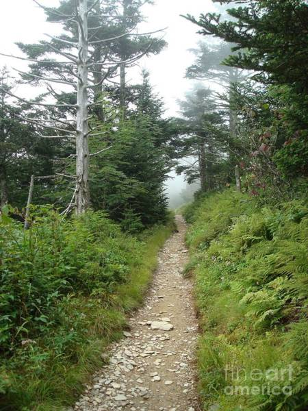 Wall Art - Photograph - Hiking Into The Clouds In The Smokies by Maili Page