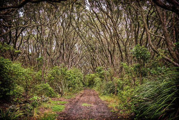 Photograph - Hiking On Rangitoto New Zealand by Joan Carroll