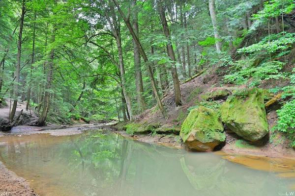 Photograph - Hiking Trail At Cedar Falls In Hocking Hill by Lisa Wooten