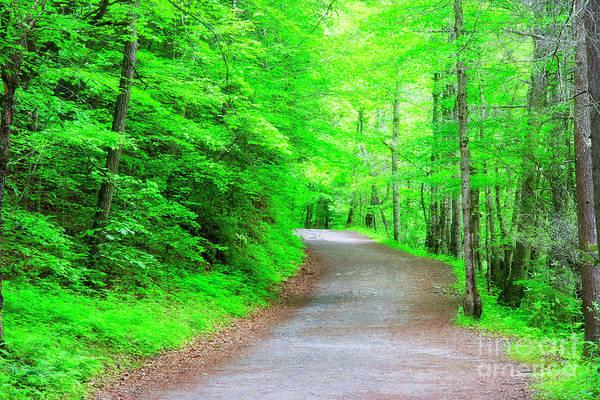 Photograph - Hiking Trail At Deep Creek Area by Jill Lang