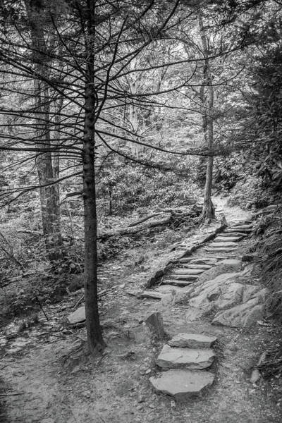 Photograph - Hiking Trail by David Hart