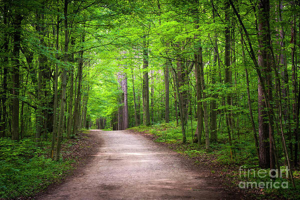 Wall Art - Photograph - Hiking Trail In Green Forest by Elena Elisseeva