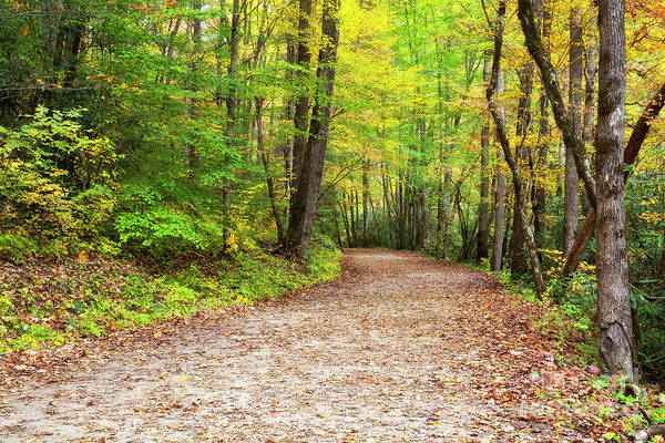 Photograph - Hiking Trail In The Fall by Jill Lang