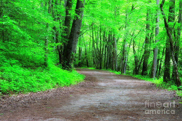 Photograph - Hiking Trail In The Spring by Jill Lang
