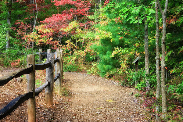 Photograph - Hiking Trail With A Fence by Jill Lang