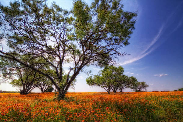 Photograph - Hill Country Spring by Van Sutherland