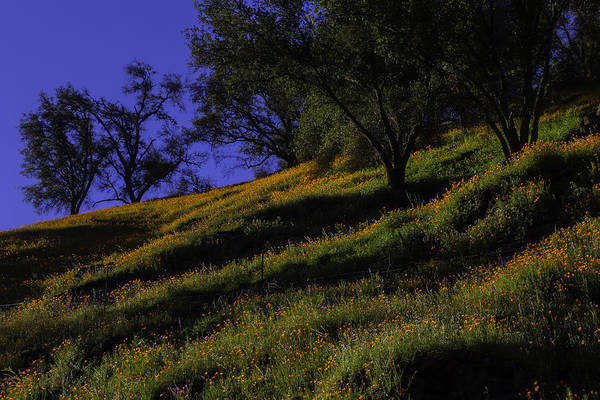 Hillside Photograph - Hill Side Poppies by Garry Gay