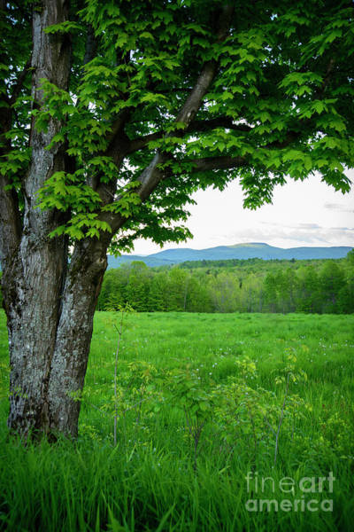 Photograph - Hills In The Distance by Alana Ranney