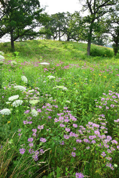 Photograph - Hills Of Wildflowers In Chain-o-lakes Sp by Ray Mathis
