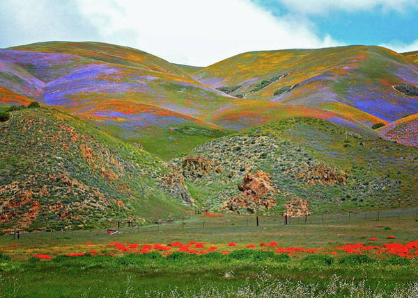Interstate 5 Wall Art - Photograph - Hills Painted With Wildflowers by Lynn Bauer