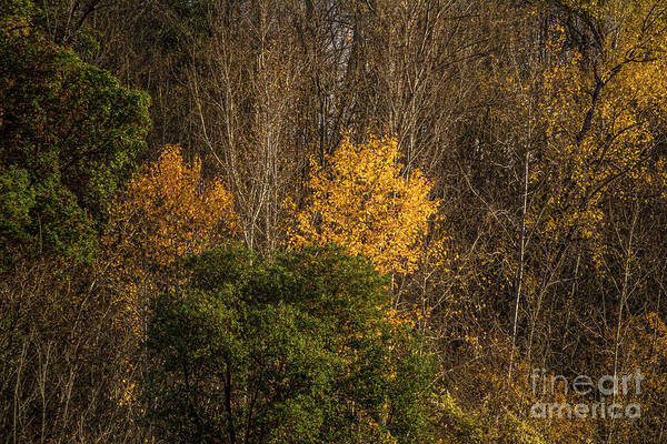 Promontory Point Photograph - Hillside Autumn by Marv Vandehey