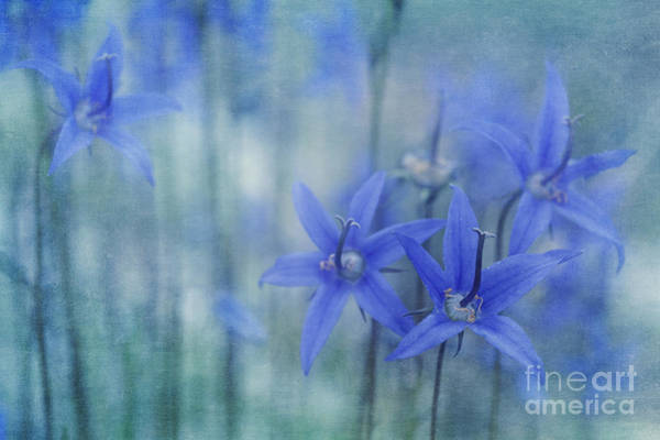 Bell Photograph - Hillside Blues by Priska Wettstein