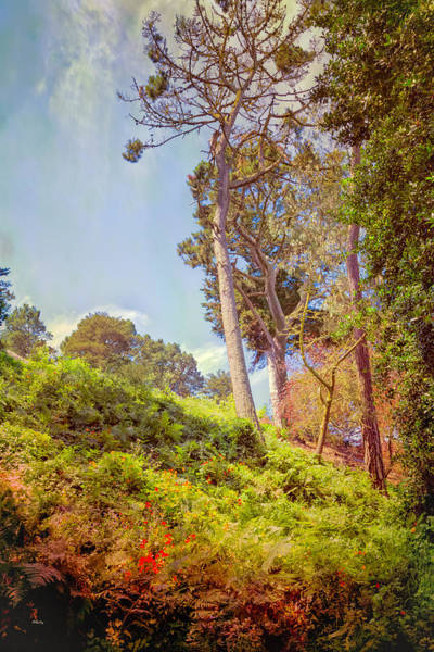Photograph - Hillside Flora by John M Bailey