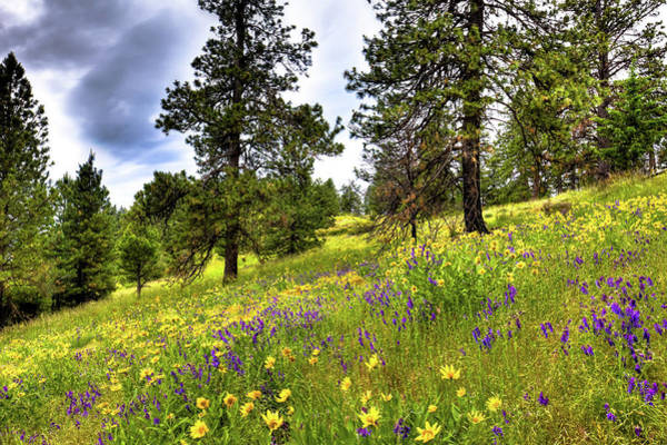 Photograph - Hillside Meadow by David Patterson