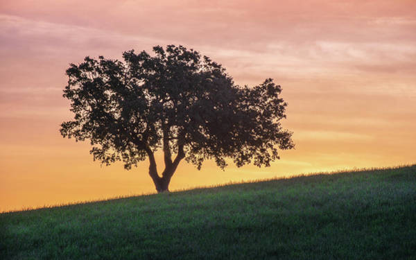 Wall Art - Photograph - Hillside Oak by Joseph Smith