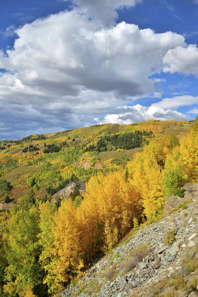 Photograph - Hillside Of Aspens by Ray Mathis