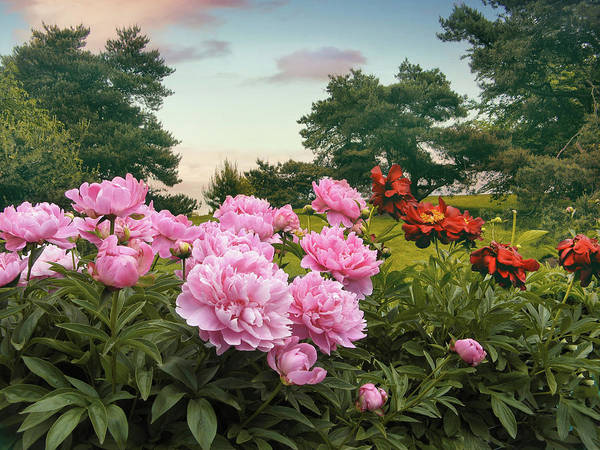 Peonies Photograph - Hillside Peonies by Jessica Jenney