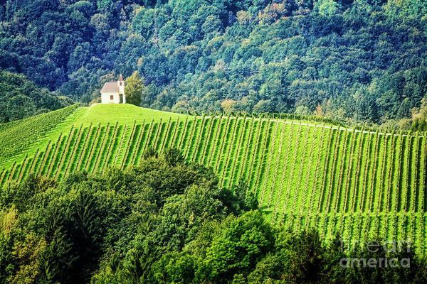 Photograph - Hillside Vineyard  by Scott Kemper