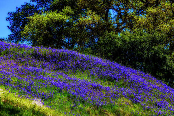 Wall Art - Photograph - Hillside Wildflowers by Garry Gay