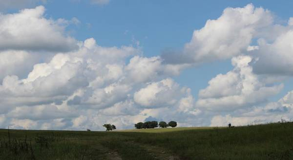 Wall Art - Photograph - Hilltop Trees by Weathered Wood