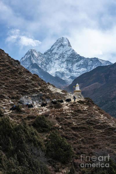 Nepal Wall Art - Photograph - Himalayan Yak Train by Mike Reid