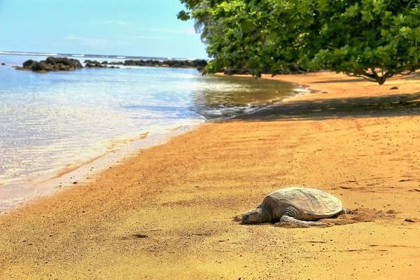 Hawaiiana Photograph - Hi'olani by DJ Florek