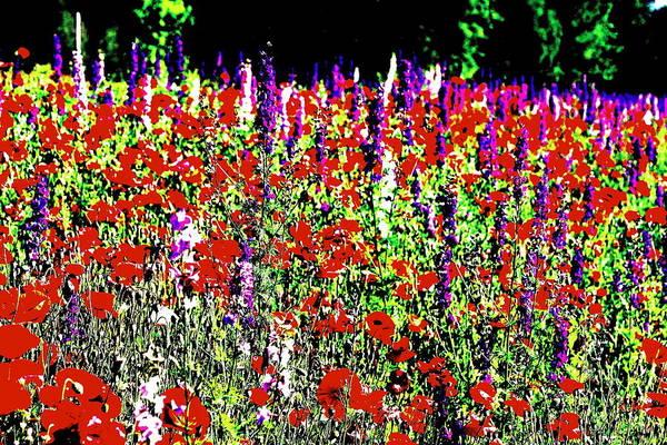 Wall Art - Photograph - Hippie Flowering by Randy Robinson