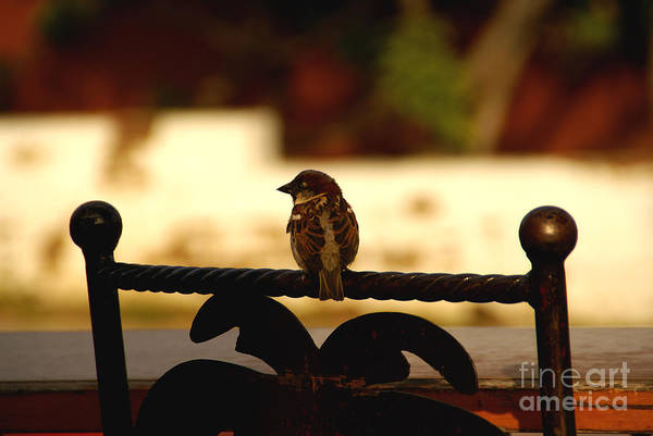 Photograph - His Eye Is On The Sparrow by Linda Shafer
