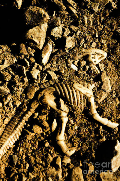 Bone Photograph - History Unearthed by Jorgo Photography - Wall Art Gallery